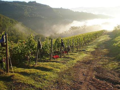 Auf 300 Metern reifen und gedeihen die Rebsorten für das Weingut Renzo Masi.