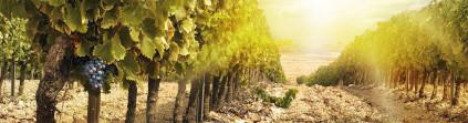 Osborne unterhält eine Vielzahl an Weingärten