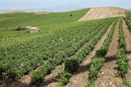 Die Hügel in Trapani