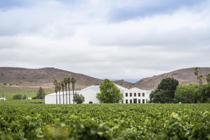 Das Weingut De Wetshof