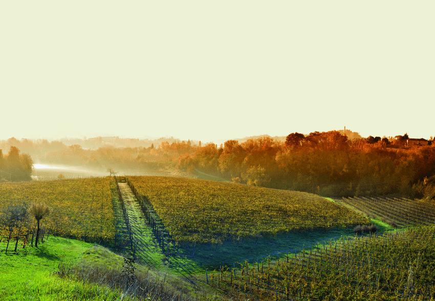 Weinberge-BorgoMolino