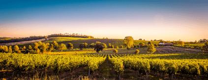 Weinberge im Bordeaux