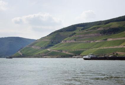 Der Rheinbogen bei Rüdesheim gibt dem Weingut Georg Breuer ein ganz spezielles Terroir