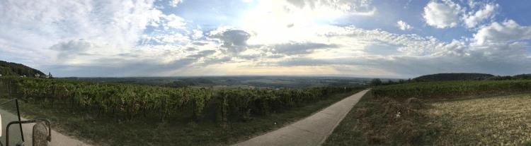 Die Weinberge von Lukas Kesselring in der Pfalz