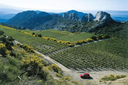 Weinbau an den Dentelles de Montmirail in Gigondas