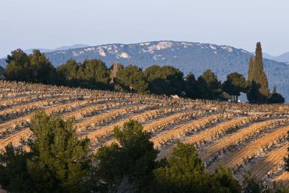 Rebflächen für die Weine von Francois Arnaud