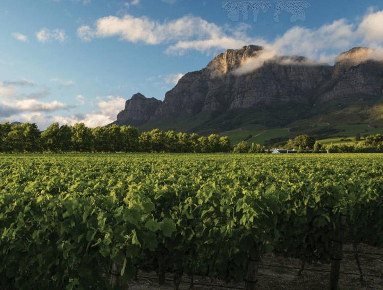 weitläufige Rebflächen bei Rupert & Rothschild Vignerons