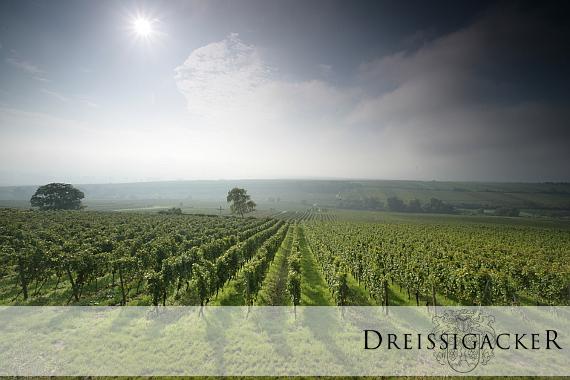 Lage Geyersberg des Weinguts Dreissigacker